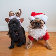 Digby and Alo the Griffons.