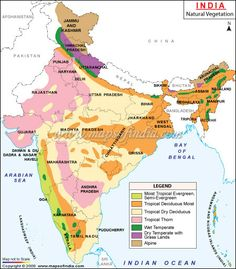 Map showing vegetation in India locating different kinds of forest vegetation like mangrove forest, scrubs, open forest and dense forest. Geography Quotes, Geography Lesson Plans, Geography Worksheets, Ap Human Geography, Geography For Kids, Geography Activities, Geography Map, Teaching Geography, World Geography