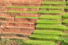 voyage, insolite, rizières, Madagascar