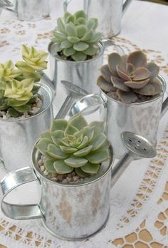 succulent in water can for wedding favor ideas
