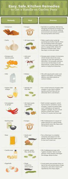 Kitchen Remedies for Garden Pests