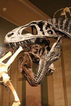 Acrocanthosaurus at the Kenosha Dinosaur Discovery Museum | Flickr - Photo Sharing!