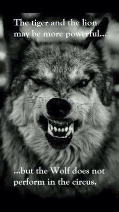 My spirit animal is the wolf. I am Christian but I believe in having sprit animals and I'm proud to be a wolf. Beautiful Creatures, Animals Beautiful, Cute Animals, Beautiful Wolves, Wild Animals, Beautiful Sunset, Great Quotes, Inspirational Quotes, Motivational