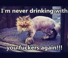 """Here is huge collection of Cat Memes that are so funny and humor. I'm sure it will make you laugh out load because these """"Top Cat Memes Laughing So Hard"""" are laughing memes. Animal Jokes, Funny Animal Memes, Funny Animal Pictures, Funny Cats, Funny Animals, Cats Humor, Funny Monkey Pics, Hilarious Pictures, Funny Videos"""
