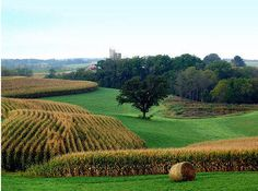 Iowa+Farms | Contour farming enhances the rolling landscape.