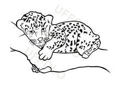 cucciolo-leopardo
