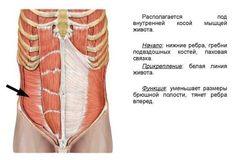 Тренировка глубоких мышц для плоского живота и здоровой поясницы Excercise, Blog, Google, Ejercicio, Exercise, Sports, Blogging, Work Outs, Exercises