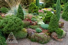 """Assorted containers and troughs mix well in the conifer garden. This site gives """"The ABC's of Dwarf Conifer Choices,"""" """"Choosing a Container for your Dwarf Conifers,"""" and """"Caring for Dwarf Conifers in Containers."""""""