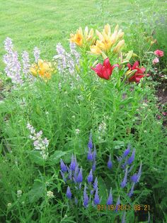 zone 4-5 gardens do well with lilies and veronica.  Clary sage is also pictured.  Flowers are growing on Plum Tree Farm in Archer Idaho.