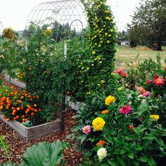 My garden mid August