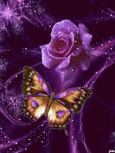 Purple rose and butterfly