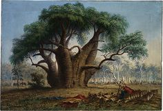 Gouty Stem Tree+ Victoria River - Baines, John Thomas (Australian, 1820 - Fine Art Reproductions, Oil Painting Reproductions - Art for Sale at Bohemain Fine Art Australian Painters, Australian Artists, Delta Del Okavango, Art Thomas, John Thomas, Water Wise Landscaping, Baobab Tree, Tree Graphic, South African Artists
