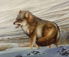 Braldt Bralds: Coyote