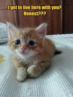 Every Kitten Deserves To Hear These Words. - LOLcats is the best place to find and submit funny cat memes and other silly cat materials to share with the world. We find the funny cats that make you LOL so that you don't have to. Silly Cats, Cute Cats And Kittens, Kittens Cutest, Funny Cats, Baby Cats, Ragdoll Kittens, Bengal Cats, White Kittens, Cute Funny Animals