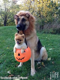 cutest dog trick-or-treating picture ever!
