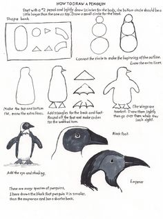 A free printable how to draw worksheet and teacher and parent resource to give the young artist confidence in drawing. Bird Drawings, Easy Drawings, Animal Drawings, Drawing Birds, Drawing Things, Penguin Drawing Easy, Penguin Sketch, Drawing Lessons, Drawing Techniques