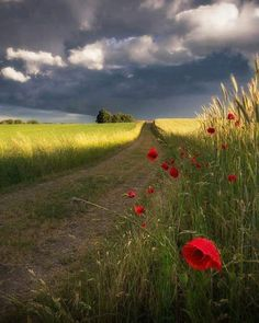 Poppies by the side of the road. Landscape Photos, Landscape Photography, Nature Photography, Photography Books, Photography Reflector, Aperture Photography, Free Photography, Photography Backdrops, Amazing Nature