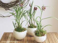 Holunderbluetchen® - Holly Flower®: Friday-Flowerday #3