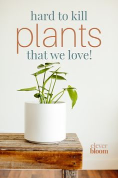 If you're looking for houseplants that are hard to kill, look no further! Check out these must have houseplants by Clever Bloom. #houseplants #hardtokillplants Perfect Plants, Cool Plants, House Plant Care, House Plants, Indoor Floor Plants, Planting Succulents, Planting Flowers, Easy Care Houseplants, Container Gardening