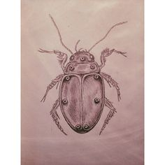 Ik noem je.. Hector;) #insect #draw