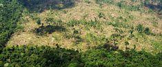 Pregopontocom Tudo: Desmatamento na Amazônia foi sete vezes maior do que a área do RJ em 2016...