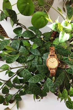 Houseplant Watering Tips - and my favorite wood accessory