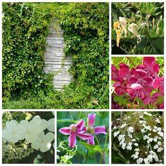 Qu\'il soit mitoyen ou qu\'il appartienne à votre voisin, l\'effet d\'un mur au jardin est sensiblement le même. Il s\'impose avec force, souligne l\'éventuelle exiguïté de l\'espace et offre bien...