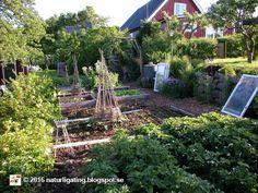Naturliga Ting Trädgårdsblogg