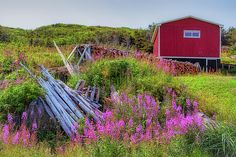 Purple Lupins in August Light by Tatiana Travelways Art Prints For Sale, Fine Art Prints, Newfoundland Canada, Atlantic Canada, Fishing Villages, Canada Travel, Travel Pictures, Travel Photography, Beautiful Places