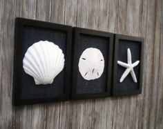 Do you want to add a bit of beach sophistication and drama to your wall? This beach wall art was designed for you! This set of three frames is 5 3/4 x 7 3/4 inch each (measuring each outside dimensions) and would be a lovely addition to your home whether hung on the wall or lean on a mantel. Each lovely sea shell is a different size and shape as you would find in the natural and is not covered by glass. Each frame is a matte white and then I added black colored burlap for interest, texture…