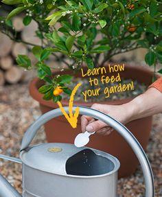 9 Ways to Take your Garden from Fine to Flourishing