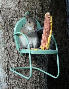 This is what squirrels are waiting for me to set up for them.