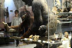 #Travel #tour #Darwin Museum (195)