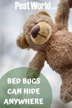 Bed bugs are commonly found in hotels, but can also live in everyday items like stuffed animals and purses. Check out NPMA's Bugs Without Borders survey to learn more about these hitchhiking pests. Pest Management, Bed Bugs, Everyday Items, Pest Control, Stuffed Animals, Hotels, Teddy Bear, Purses, Live