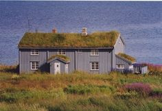 Norwegian meadows on the ground and roof. Photo by Monika Brenneisen
