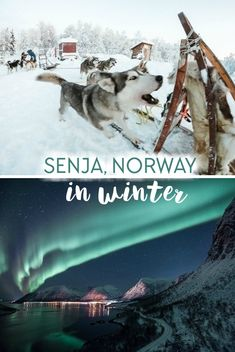 Winter in Senja, Norway, including husky sledding and chasing the Northern Lights in Norway Lappland, Tromso, Trondheim, Stavanger, Helsinki, Cool Places To Visit, Places To Travel, Norway Winter, Northern Lights Norway