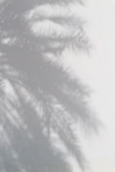 silhouette of palm tree photo – Free Black-and-white Image on Unsplash Window Shadow, Shadow 2, Light And Shadow, Shadow Tree, Shadow Images, Shadow Pictures, Story Instagram, Photo Instagram, Shadow Photography