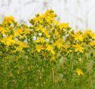 Sinir Sıkışmasına Ne İyi Gelir? - Sağlık Rehberim Diet And Nutrition, The Cure, Herbs, Plants, Sari, Leaves, Saree, Herb, Plant