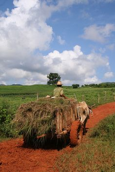 Traditional farming methods still used in rural Cuba ~Repinned Via Traiteur Weber
