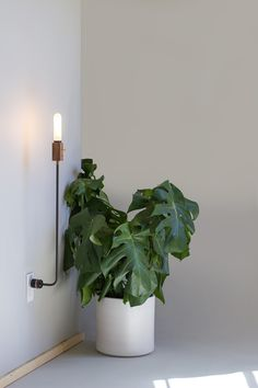 I am in love with this plug-in sconce. Wald Plug Lamp by feltmark