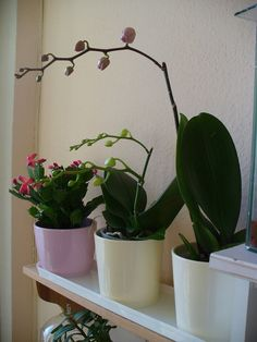 Fruit Garden, My Secret Garden, Flora, Planter Pots, Wreaths, Diy, Home Decor, Gardening, Decoration Home