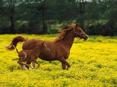 Wild and free #horses