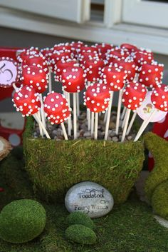 Toadstool fairy wands (marshmallow pops with red candy coating and white sugar pearls)