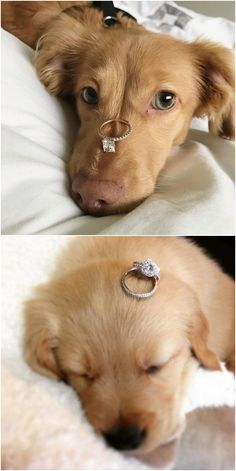 Wedding Rings: Choosing the Perfect Wedding Ring - Put the Ring on It Cute Baby Dogs, Cute Dogs And Puppies, Cute Baby Animals, Funny Animals, Doggies, Cute Wedding Ideas, Perfect Wedding, Engagement Pictures, Wedding Pictures