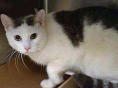 SONNY - A1093803 - - Manhattan  ***TO BE DESTROYED 10/30/16*** Please Share:-  Click for info & Current Status: http://nyccats.urgentpodr.org/sonny-a1093803/