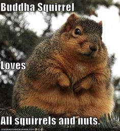Buddha Squirrel Loves All squirrels and nuts.