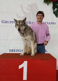 Saphira Bjartskular di Fossombrone 1 Eccellente CAC - CACIB e Migliore di razza alla Esposizione Internazionale Canina di Montichiari 2015!!!! Proprietà: Michele Masini