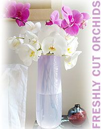 care for cut orchids