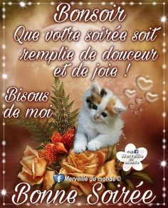 Bon Mardi, Photo Chat, Belle Photo, Teddy Bear, Poster, Animals, Facebook, Love Pictures, Hapy Day