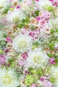Raindrops and Roses: Photo My Flower, Fresh Flowers, Wild Flowers, Beautiful Flowers, Spring Flowers, Flowers Garden, Flowers Wine, Motif Floral, Arte Floral